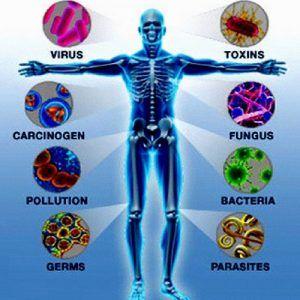 human body immunity
